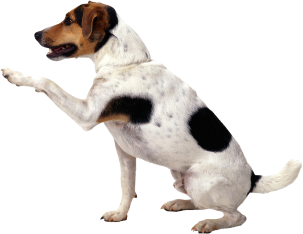 dog_PNG50312-copy-980x756